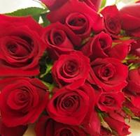 バラの花言葉は色や本数で違うって知ってましたか?