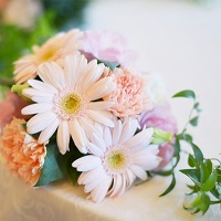 ガーベラの花言葉を色別に紹介!!女子力がUPする花言葉って!?