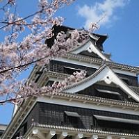 熊本城の桜開花情報2016~おすすめの花見スポットやライトアップは?