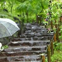 雨の名前と種類を一覧で紹介!日本人の豊かな感性に感動!