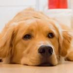 犬の熱中症 症状や対処法、対策は?間違うと死亡や後遺症のリスクが!