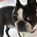 犬に夏場のエアコンは必要?留守番中や夜の設定温度、停電対策は?