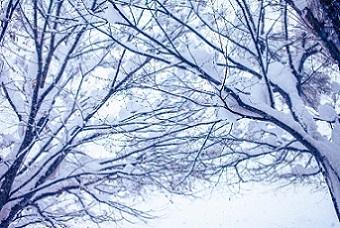 雪 種類 名前