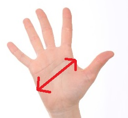 手袋 サイズ 選び方