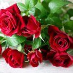 バラの花束100本の意味や値段は?もらったら困る?嬉しい?