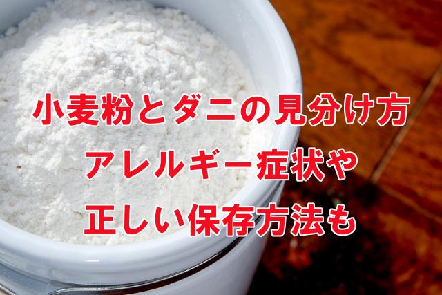 小麦粉とダニの見分け方